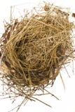 Uccello \ 'nido di s Fotografia Stock