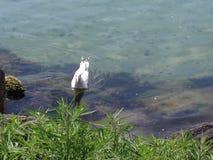 Uccello in oceano Fotografie Stock Libere da Diritti