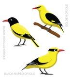 Uccello Oriole Set Cartoon Vector Illustration Fotografia Stock Libera da Diritti