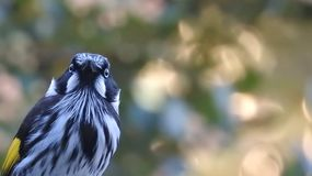 Uccello pazzo Immagine Stock Libera da Diritti