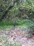 uccello piacevole Fotografia Stock
