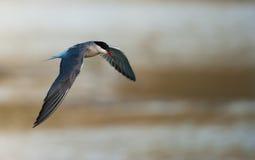 Uccello predante immagini stock libere da diritti