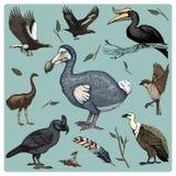 Uccello realistico di vettore disegnato a mano, stile grafico di schizzo, insieme di domestico avvoltoi e pappagallo vasto-fattur illustrazione di stock
