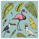 Uccello realistico di vettore disegnato a mano, stile grafico di schizzo, insieme di domestico pappagallo di cacatua, tucano di t illustrazione di stock