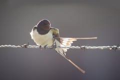 Uccello retroilluminato Fotografia Stock