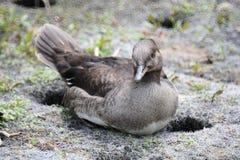 Uccello a riposo fotografie stock