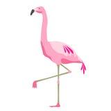 Uccello rosa del fenicottero sopra fondo bianco Immagine Stock