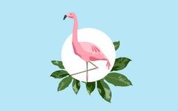 Uccello rosa del fenicottero sopra fondo blu Fotografia Stock