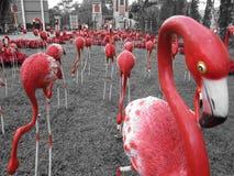 Uccello rosso Fotografie Stock