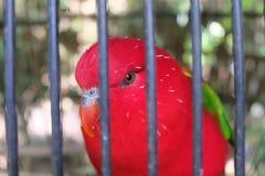 uccello rosso nello scheletro fotografie stock libere da diritti