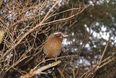 Uccello selvaggio Fotografia Stock Libera da Diritti