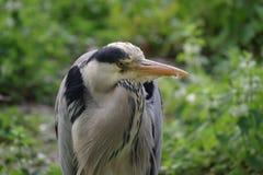 Uccello selvaggio Fotografia Stock
