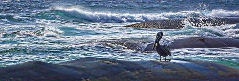 Uccello selvaggio su una spiaggia rocciosa dell'oceano Immagini Stock
