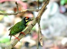 Uccello in servizio Fotografie Stock