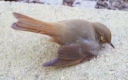 Uccello sgomento Fotografie Stock Libere da Diritti