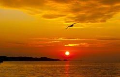 Uccello solo. Immagine Stock Libera da Diritti