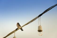 Uccello solo Fotografia Stock Libera da Diritti