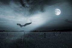 Uccello solo nella luce della luna Fotografie Stock Libere da Diritti