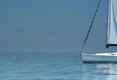 Uccello sopra acqua e l'yacht silenziosi di bianco. Fotografie Stock