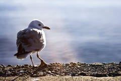 Uccello spaventoso Fotografia Stock Libera da Diritti