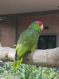 Uccello stancato immagine stock