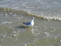 Uccello su acqua Immagini Stock