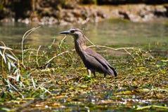 Uccello su acqua con le piante Fotografia Stock