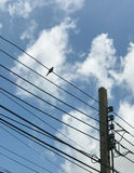 Uccello su alimentazione di rete della città con il fondo del cielo blu Fotografia Stock Libera da Diritti