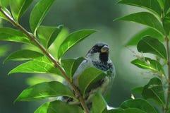 Uccello su Bush Immagine Stock Libera da Diritti