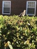 Uccello su Bush Fotografia Stock Libera da Diritti