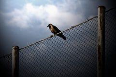 Uccello su collegare Immagine Stock