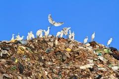 Uccello su immondizia Fotografia Stock