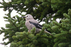 Uccello su un albero Fotografia Stock