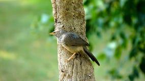 Uccello su un albero immagini stock