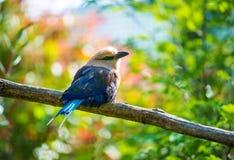 Uccello su un albero Fotografie Stock