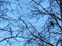 Uccello su un albero Immagine Stock Libera da Diritti