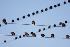 Uccello su un collegare Fotografia Stock Libera da Diritti