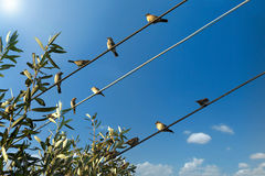 Uccello su un collegare Immagini Stock