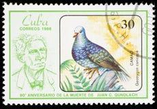Uccello su un francobollo Immagine Stock