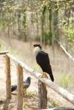 Uccello su un impallidire Fotografia Stock