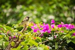 Uccello su un ramo Fotografia Stock