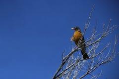 Uccello su un ramo Fotografie Stock Libere da Diritti