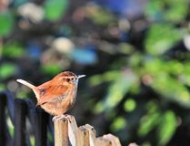 Uccello su un recinto Fotografia Stock Libera da Diritti