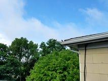 Uccello su un tetto Fotografie Stock