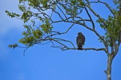 Uccello su una filiale nei terreni paludosi della Florida Immagine Stock