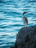 Uccello su una roccia, Opatija, Croazia Fotografia Stock