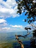 Uccello su una spiaggia immagine stock libera da diritti