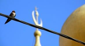 Uccello su una stringa Fotografia Stock Libera da Diritti