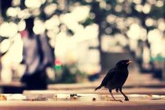 Uccello su una tabella di cibo Fotografia Stock