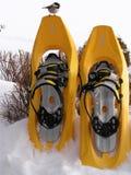 Uccello sugli snowshoes Immagini Stock